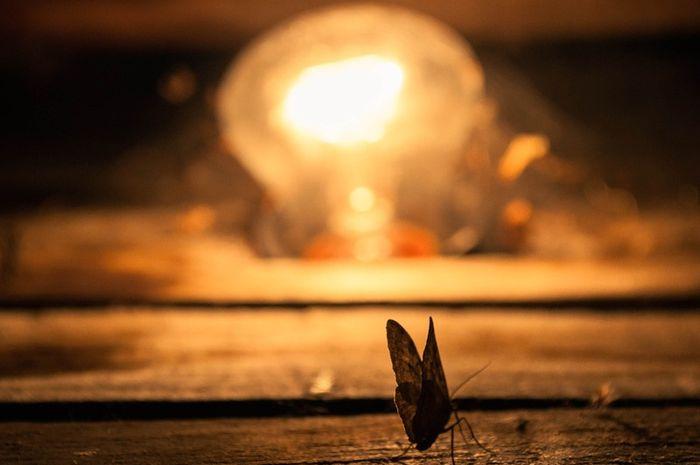 Ilustrasi Ngengat mendekati cahaya
