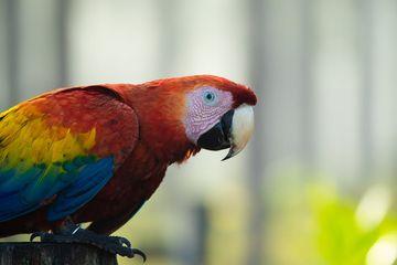 Burung Beo Terkenal Bisa Tirukan Suara Manusia Ternyata Ini Penyebabnya Semua Halaman Kids