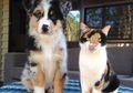 10 Pasang Hewan Beda Spesies Ini Kayak Kembar. Bikin Gemas!