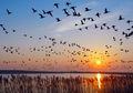 Mengapa Burung Tidak Pernah Saling Bertabrakan Saat Terbang?