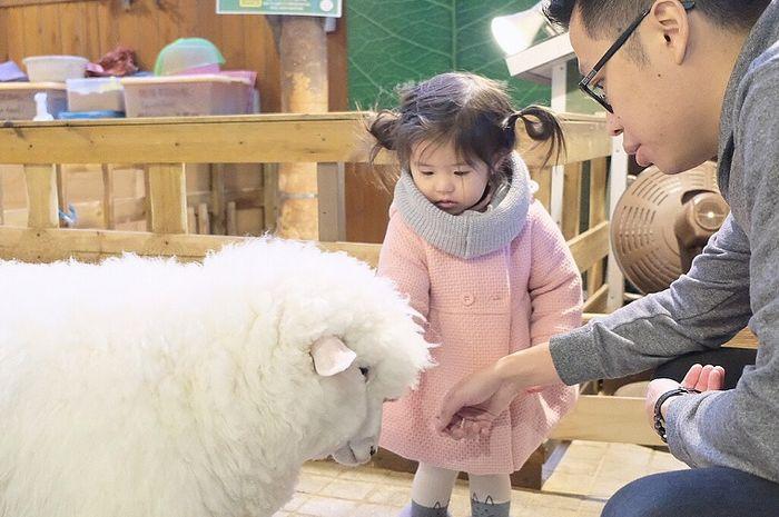 Kafe domba di Korea Selatan punya konsep lucu dan unik