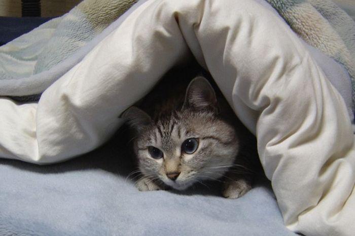 Kucing yang sering bermain di atas kasur bisa berbahaya untuk tubuh