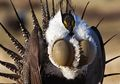 8 Foto Hewan Langka Ini Kelihatan Seperti Makhluk dari Dimensi Lain