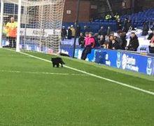 Kucing Hitam Ini Mendadak Terkenal Usai Menyusup dalam Laga Liverpool Vs Everton