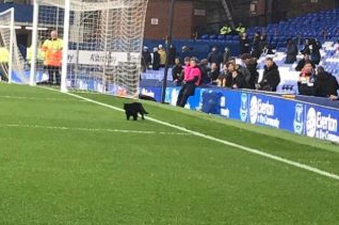 Seekor kucing hitam menyusup sebelum laga Liverpool versus Everton di Goddison Park, Minggu (3/3/2019).