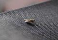 Ini Cara Ampuh Basmi dan Mencegah Lalat Agar Tak Masuk ke Rumah!