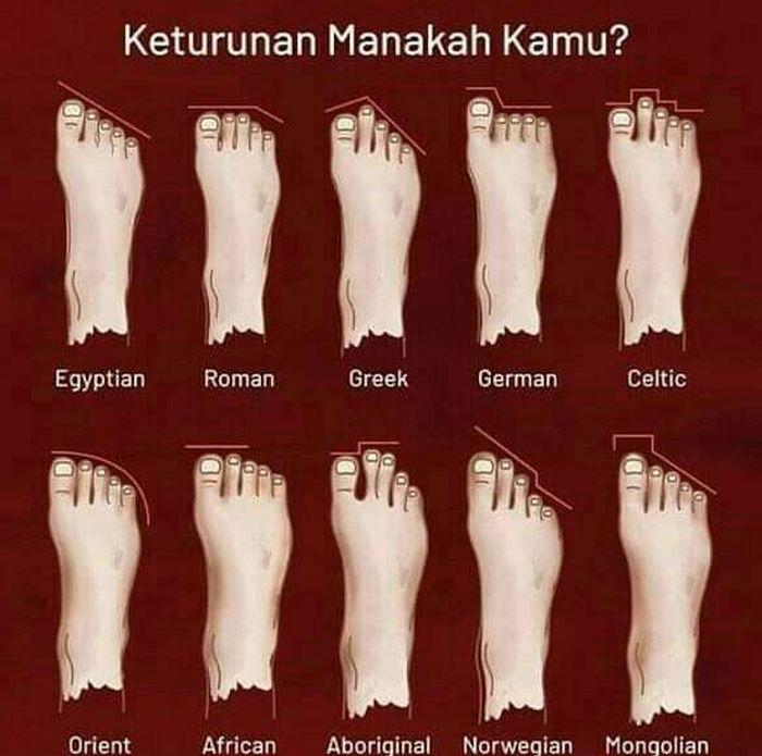 Infografis hubungan bentuk jari kaki dengan keturunan seseorang.