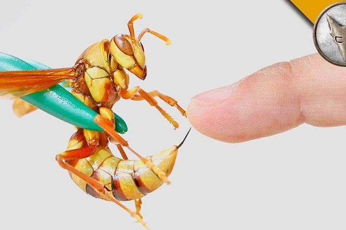 Executioner wasp alias tawon algojo