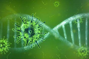 WHO Sahkan Protokol Pengujian Obat Herbal untuk Tangani COVID-19
